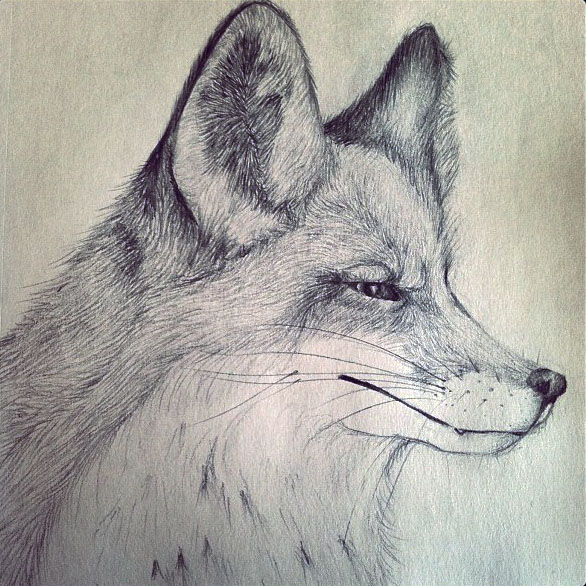 From sketchbook to blog my spirit animal puget sound for Cool fox drawings