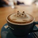 Cat cocoa