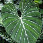 O mercado de plantas domésticas raras - Economia sólida 6