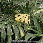 O mercado de plantas domésticas raras - Economia sólida 3