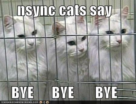 cat bye