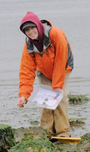 "Mary Krauszer placing ""lard-stars"" (dough model sea stars) at Point Defiance for gull predation trials."