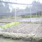 Small, organic farm