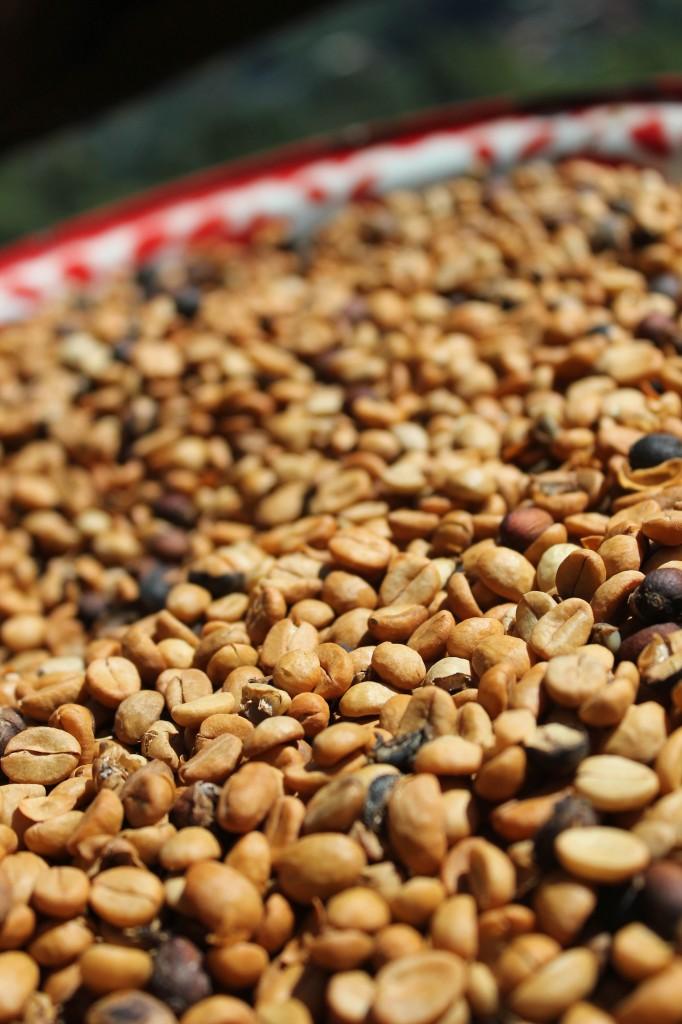 Thai Hilltribe Coffee