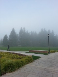Oh, fog. How can I count the ways I love thee?