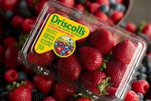 driscollls berries