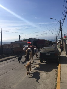 The city cowboys hauling produce down the hill